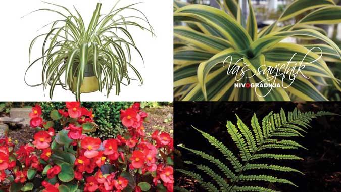 biljke-za-stan